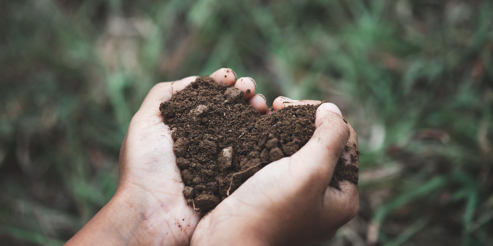 Soil blog