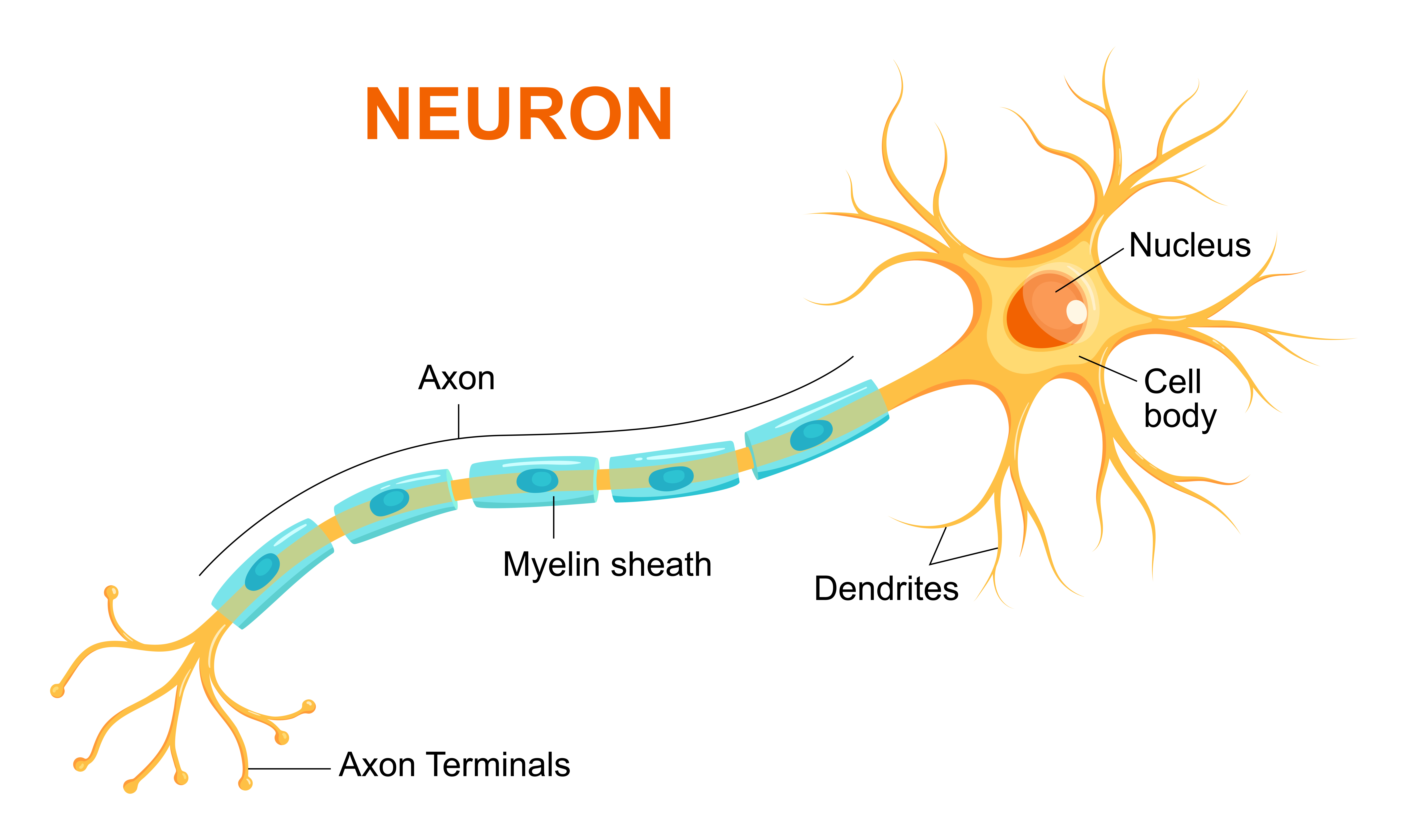 What Is Nerve Growth Factor?